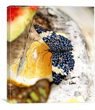 Butterfly on an Orange, Canvas Print
