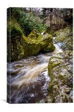 Tollymore Forest, Mournes, Northerm Ireland Game , Canvas Print