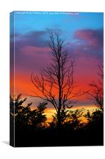 Sunset and Sillouettes , Canvas Print