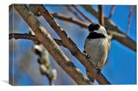 Chickadee in a Willow., Canvas Print