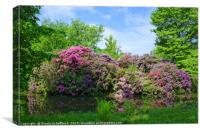 Amazing Rhododendron, Canvas Print