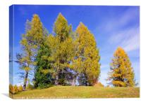 Idyll With Larches, Canvas Print