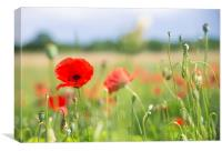 Flower meadow with red poppy, Canvas Print