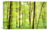 Bright green trees in spring, Canvas Print