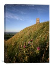 Glastonbury Tor and a Thistle, Canvas Print