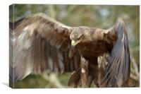 Golden Eagle , Canvas Print