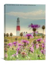 Portland Bill through wild flowers , Canvas Print