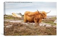 Highland Cattle on Hathersage Moor in Derbyshire, Canvas Print