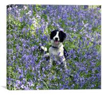 Collie in Bluebells, Canvas Print