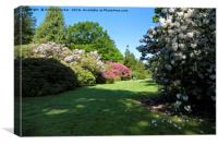 Rhododendron's at Heaven's Gate, Longleat, UK, Canvas Print