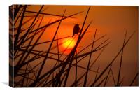Sunset Bird, Canvas Print