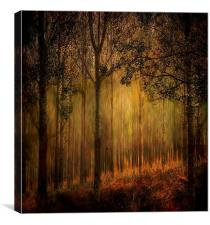 Magical Forrest , Canvas Print