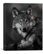 The Wolf, Canvas Print