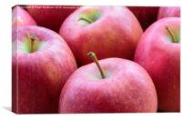 Red Apples, Canvas Print