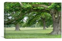 Big, Old Trees close to Corsham, Cotswolds England, Canvas Print