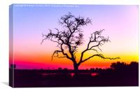 African Tree At Sunset, Canvas Print