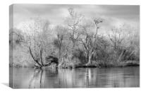 Trees and Water, Canvas Print