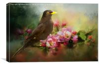 Blackbird with Apple Blossom, Canvas Print