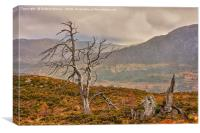 Dead Trees in the Highlands, Canvas Print