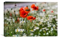 Poppys in front of a sea of bokeh, Canvas Print