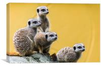 Meerkats on the look out, Canvas Print