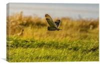 Hunting Short eared Owl, Canvas Print