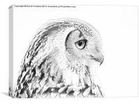 Drawing conversion of European Eagle Owl, Canvas Print