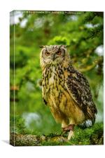 Indian or Bengal Eagle Owl, Canvas Print