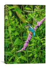 Kingfisher on colourful perch, Canvas Print