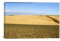 Yorkshire Wolds at Harvest Time, Canvas Print