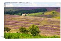 North York Moors, Canvas Print