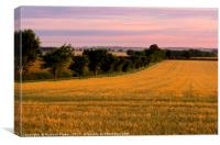 Sunrise over the Barley Field., Canvas Print