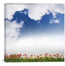 Red and yellow tulips and cloudscape , Canvas Print