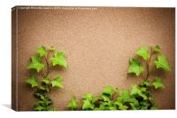 leaves of hedera helix ivy and wall , Canvas Print