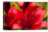 Red Lily stamens macro, Canvas Print
