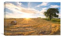 Hay bales and the late day sun rays, Canvas Print