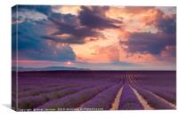 Lavender Field at Sunset II, Canvas Print