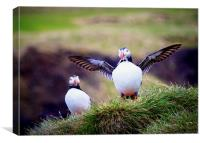 Proud Puffin, Canvas Print