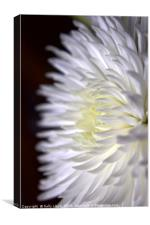 White Flower Two, Canvas Print