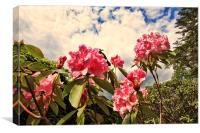 Pink rhododendron flowers against the sky, Canvas Print