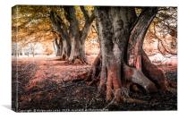 Amazing trees in the park of Scotland, Canvas Print