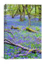 Beautiful bluebells in the forest of Scotland, Canvas Print