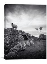 Sheep in mono, Canvas Print
