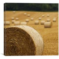 Rolling In Hay., Canvas Print