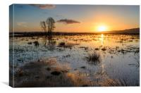 Flooded Levels in Somerset, Canvas Print