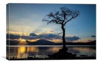 Lomond Gold, Canvas Print