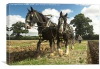 Ploughing Horses 2 , Canvas Print