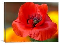 """POPPY IN THE MARIGOLDS"", Canvas Print"