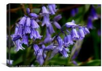 """""""Bluebells in the breeze"""", Canvas Print"""