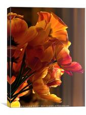 """""""Soft light on the tulips"""", Canvas Print"""